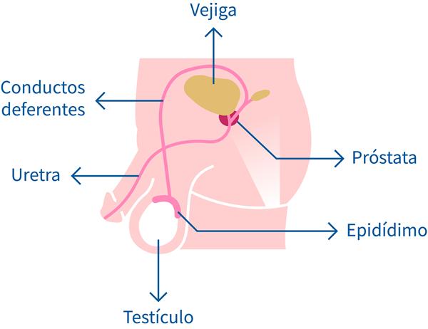 A krónikus prosztatitis kezelésének ára Az emberek receptjei a prosztatitis kezelésére